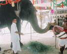 Ganesh yagya with elephant photo